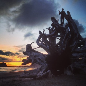 Bran on top of the driftwood tree on the beach in La Push.